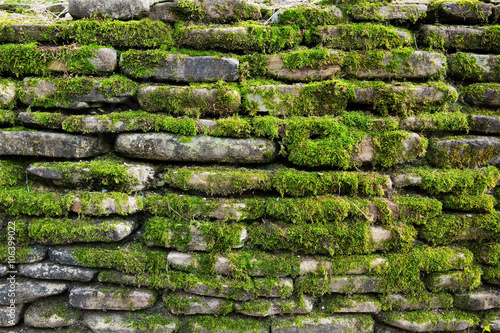 Fotografie, Obraz  Green moss on old stone wall
