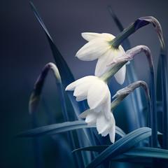 Fototapeta Popularne abstract spring background