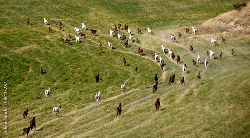 Photo  dört nala giden bir at sürüsü