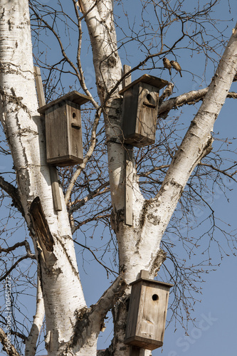 Canvas-taulu Three birdhouse on a birch tree with birds on blue sky background