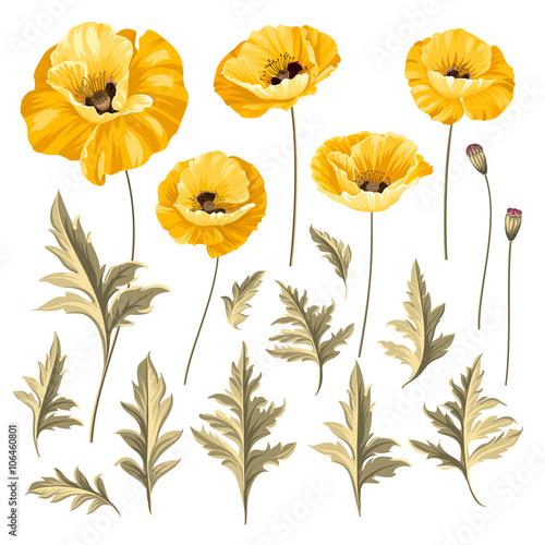 Set of poppy flowers elements