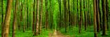 Fototapeta Las - forest trees