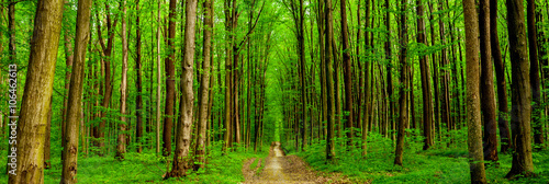 Foto op Canvas Weg in bos forest trees