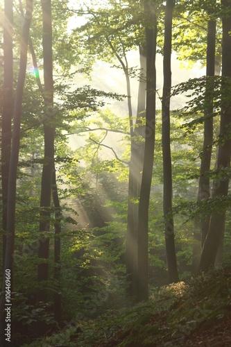 Foto auf Acrylglas Wald im Nebel Lesny poranek