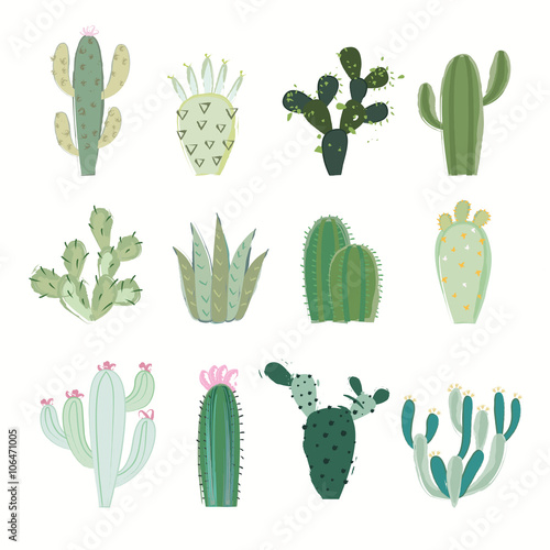 Fotografía  Cactus collection in vector illustration