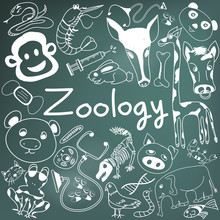 Zoology Biology Doodle Handwriting Icons Of Animal Species And Education Tools In Blackboard Background For Science Presentation Or Subject Title, Create By Vector