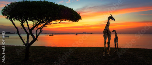 Fotografie, Obraz  Giraffes in the savannah at sunset