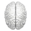 Brain is a close-up isolated on white background