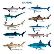 Shark Fish Vector Set In Flat Style Design. Different Kind Of Sharks Species Icons Collection.