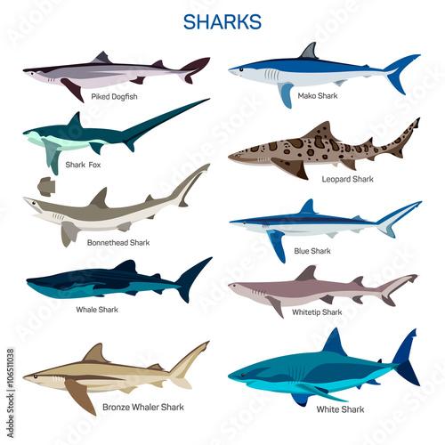 Cuadros en Lienzo Shark fish vector set in flat style design