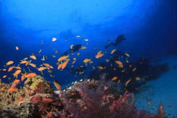 Fototapeta na wymiar Scuba diving