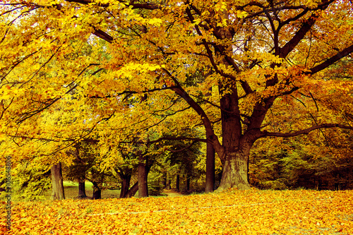 Wall Murals Melon Forest in Fall in Vibrant autumnal colors, trees in full multicolored foliage