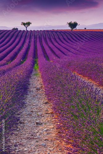 Spoed Foto op Canvas Violet Beautiful colors purple lavender fields near Valensole, Provence