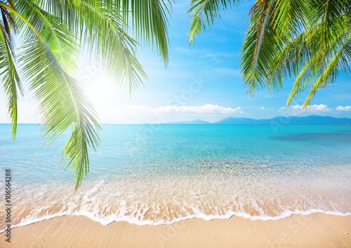 Tuinposter Palm boom Palm and tropical beach