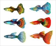 Six Colorful Aquarium Fish