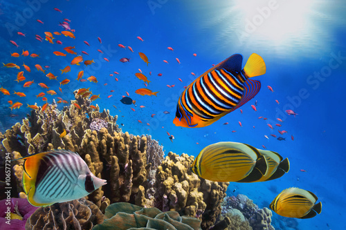 Poster Sous-marin Coral Reef and Tropical Fish in Sunlight