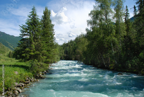 Printed kitchen splashbacks River Altai, mountain river Kucherla, forest landscape, Altai, Russia