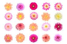 Various Dahlia Flowers Isolate...