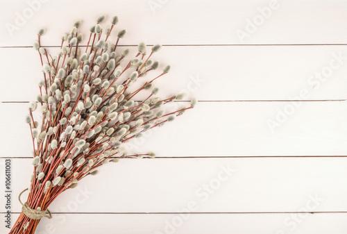 Fototapeta Willow twigs on wooden background obraz na płótnie