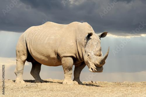 Fototapeta premium Rhino