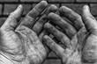 canvas print picture - Von Arbeit gezeichnete Hände