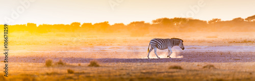 Foto op Canvas Zebra Zebra Sunset Africa