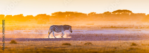 Poster Zebra Zebra Sunset Botswana