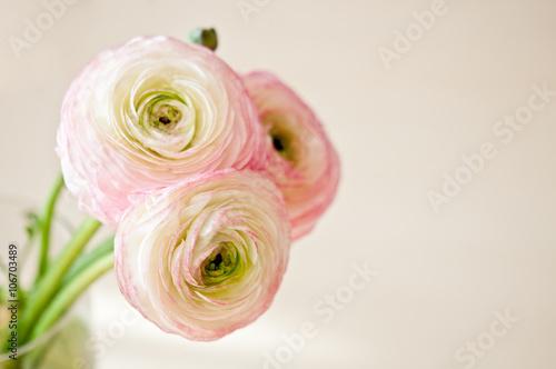 Obraz na plátně Bouquet of ranunculus in vase in white, pink and beige pastel colors
