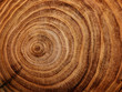 Leinwanddruck Bild - stump of oak tree felled - section of the trunk with annual rings