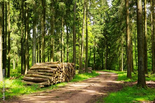 Fototapeten Wald Sunlight in the green forest.