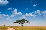 Fototapeta Sawanna - African road on savannah