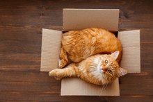 Ginger Cat Lies In Box On Wood...
