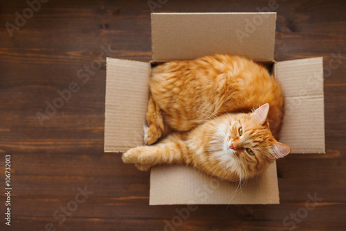 Fotobehang Kat Ginger cat lies in box on wooden background. Fluffy pet is going to sleep there.