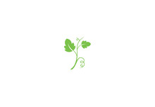 Grape Leaf Vector Illustration Isolated On White Background Logo