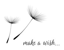 Make A Wish Card With Dandelion Fluff