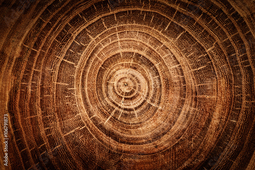 stump of oak tree felled - section of the trunk with annual rings Fototapet