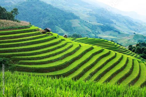 Fotobehang Rijstvelden Rice fields on terraced in rainny season at Mu Cang Chai, Yen Bai, Vietnam. Rice fields prepare for transplant at Northwest Vietnam