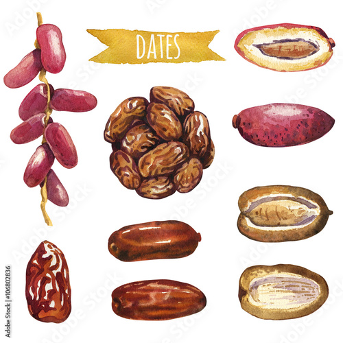 Valokuva  Dates, hand-painted watercolor set, vector clipping paths included