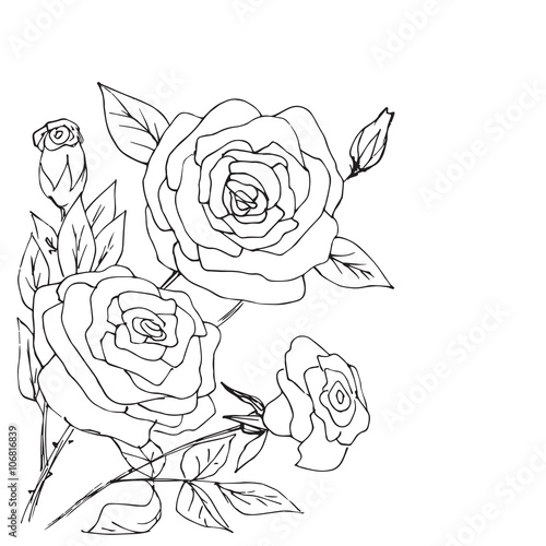 Hand drawn composition of roses, buds and leafs #106816839