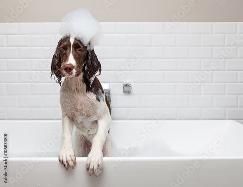 Fényképezés  Funny Wet Dog Wants Out of Tub