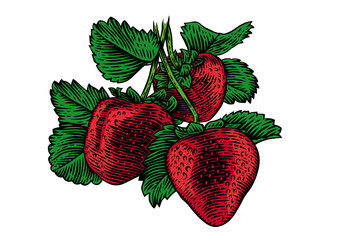 Naklejka Bush of strawberry