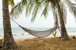palm trees and hammock on the beach