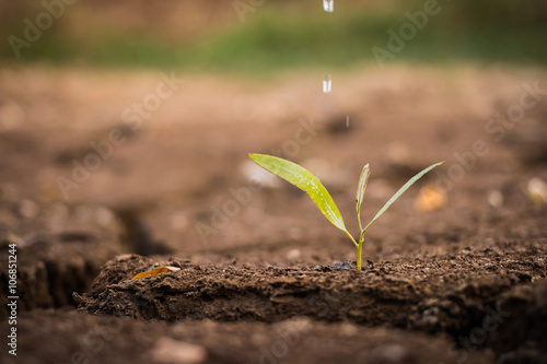 Fototapeta watering the ground barren obraz na płótnie