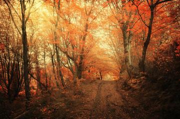 Осенний лес. Лесные тропы в осеннем лесу