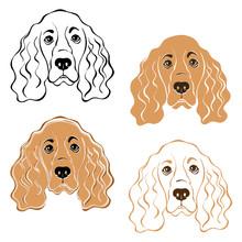 Cocker Spaniel Dog's  Face. Hand-drawn Vector Illustration.