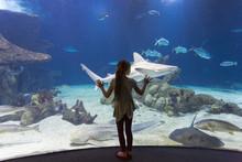 Caucasian Girl Admiring Fish I...