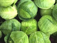 Fresh Picked Lettuce Background