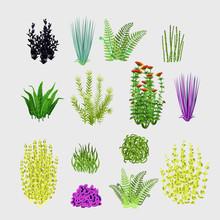 Varieties Of Plants, Big Set 1...