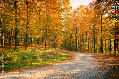 Canvas Prints Road in forest Beautiful forest scene in day light in autumn.