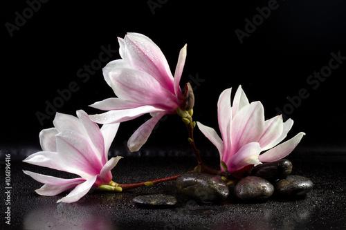 kwiaty-magnolii-i-kamienie-zen-na-czarnym-tle